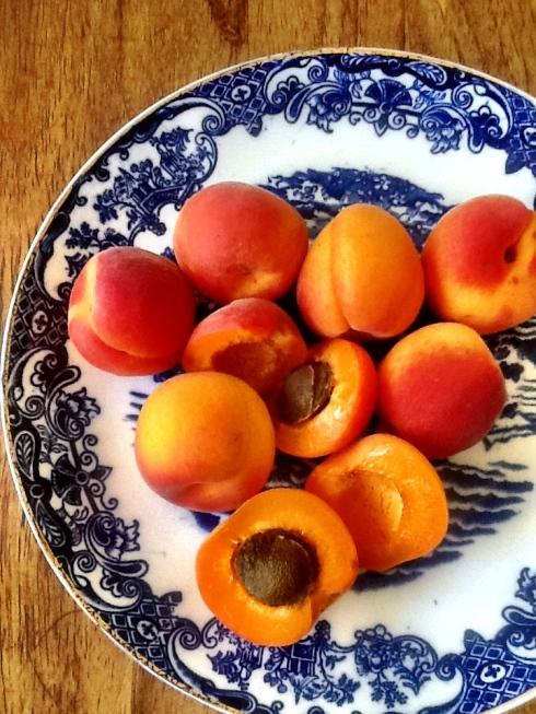 appelkose op hul eie